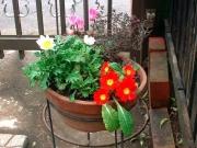 春の色とりどりの寄せ植え