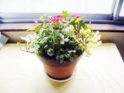 春の小さい花の寄せ植え